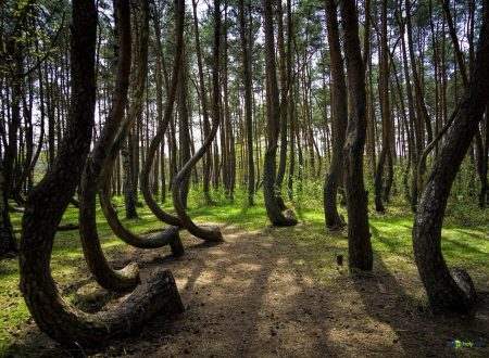 La misteriosa foresta storta della Polonia
