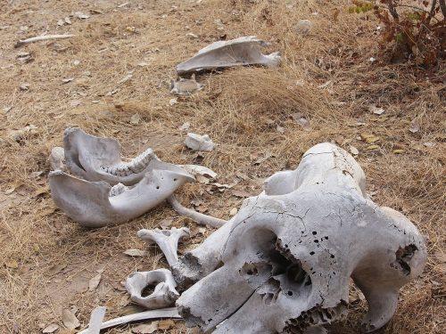 La leggenda del misterioso e magico cimitero degli elefanti